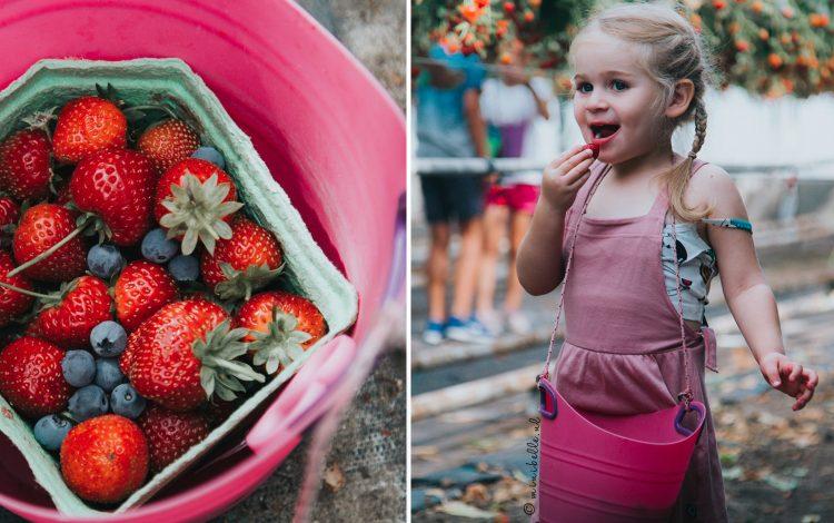 Schoolvakantie: Vers fruit plukken bij Framblij