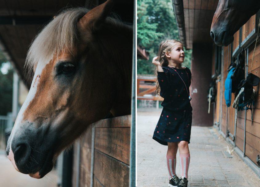 Een dagje uit dichtbij huis: bos, speeltuin en de paardenstal